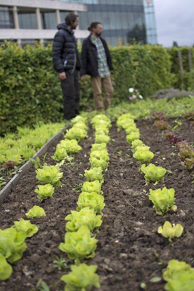 L'entretien des espaces verts et jardins dans les Yvelines 78