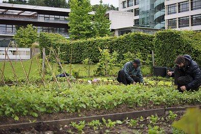 Atelier de l'Esat espaces verts et jardins dans les Yvelines 78
